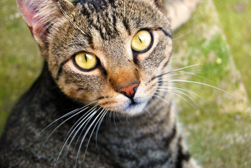 Nuestros animales domésticos imagen de archivo libre de regalías