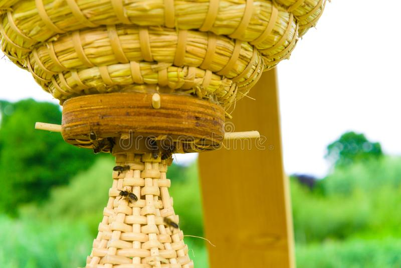 Nueva estructura de la colmena en el vondelpark en Amsterdam imagen de archivo