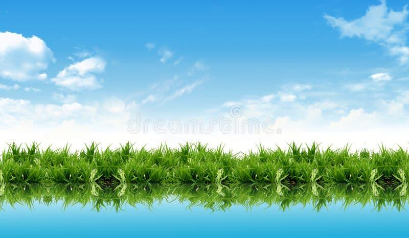 Nueva hierba fresca con la reflexión del agua fotos de archivo