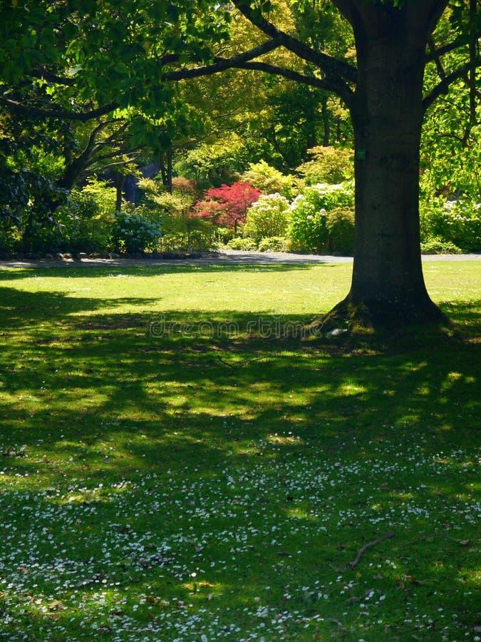 Nueva Zelanda: Árboles y arbustos de los jardines botánicos de Christchurch fotografía de archivo