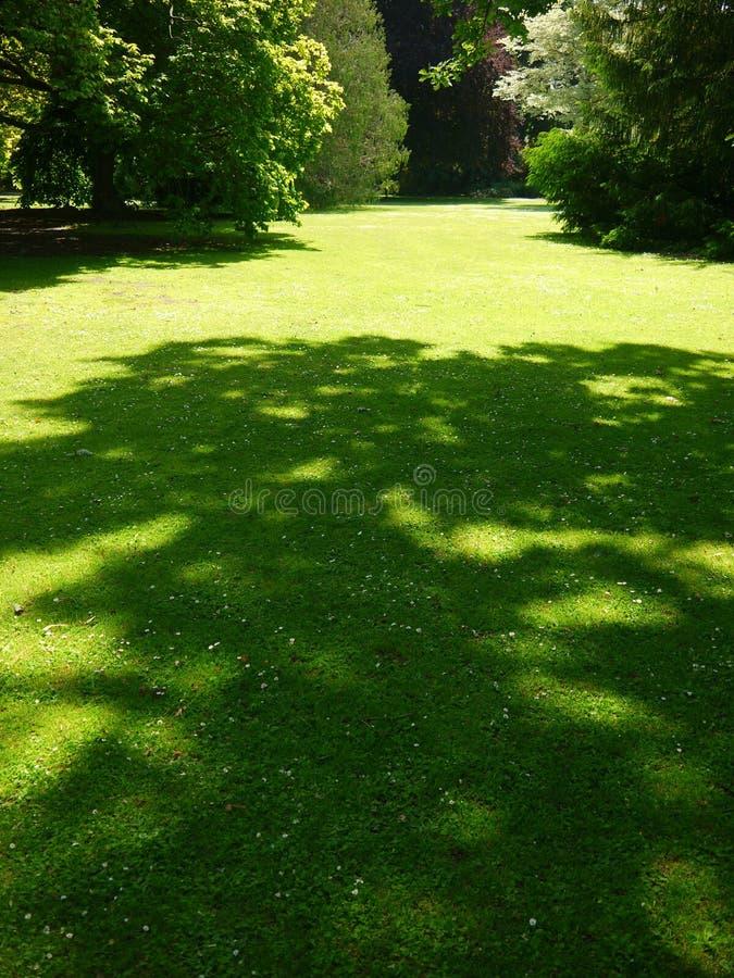 Nueva Zelanda: Césped v de los árboles de los jardines botánicos de Christchurch imagen de archivo