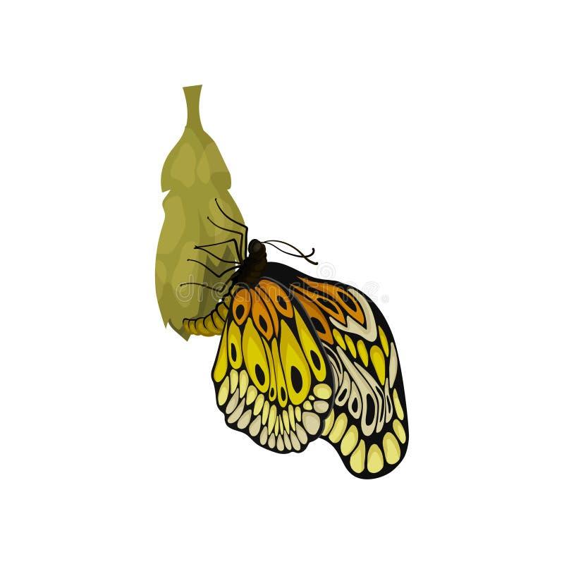 Nuevamente mariposa nacida hermosa que sienta en ella el capullo de s Insecto con dos pares de alas Criatura del vuelo Icono plan ilustración del vector