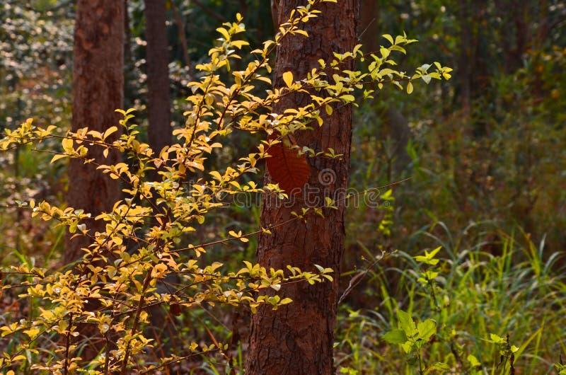 Nuevas hojas hermosas del árbol en el bosque imagen de archivo