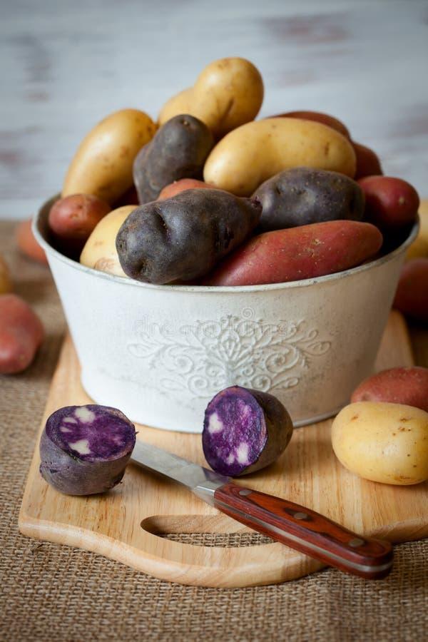 Nuevas patatas clasificadas foto de archivo libre de regalías