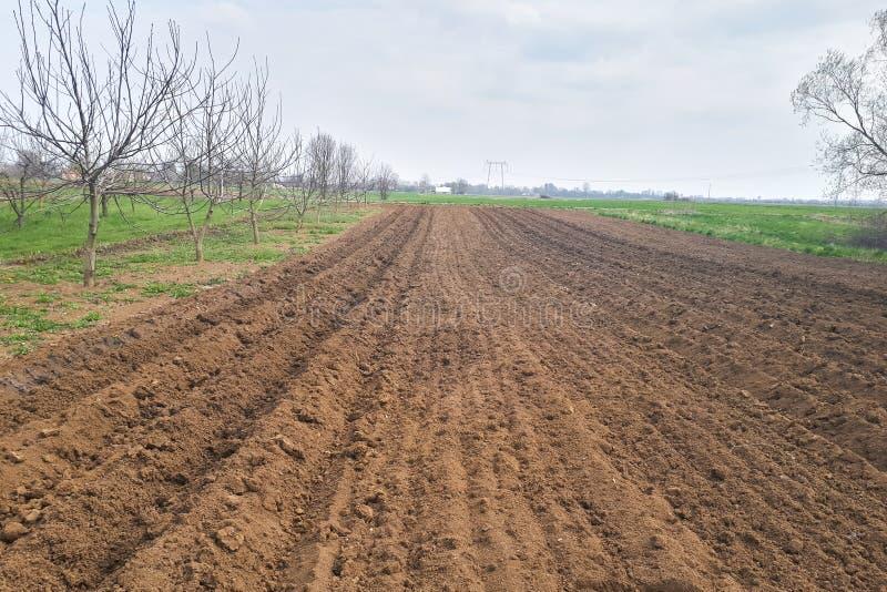 Nuevas patatas que crecen en filas durante la primavera imagen de archivo libre de regalías