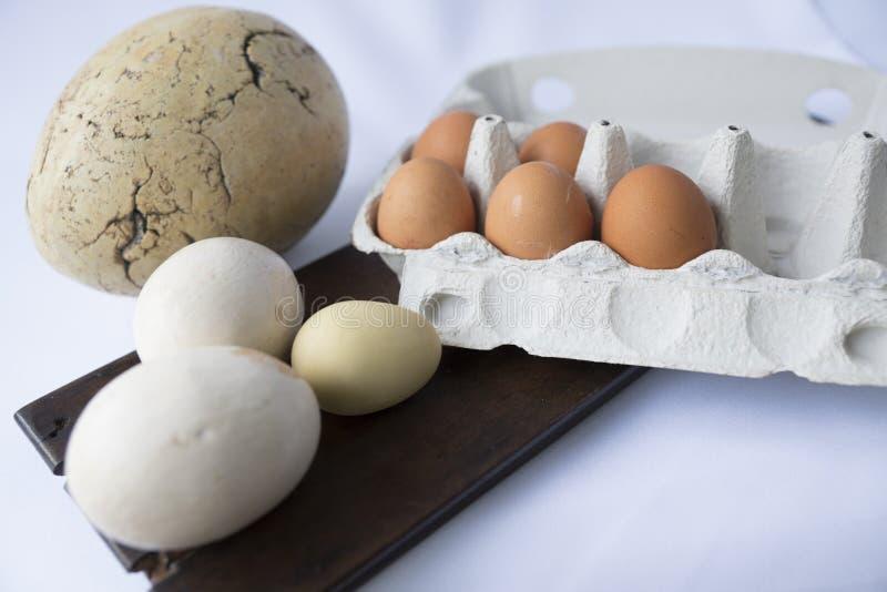Nueve huevos en varios colores blancos y tamaños mezclados foto de archivo libre de regalías