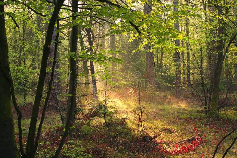 Nuevo arbolado del bosque imagen de archivo