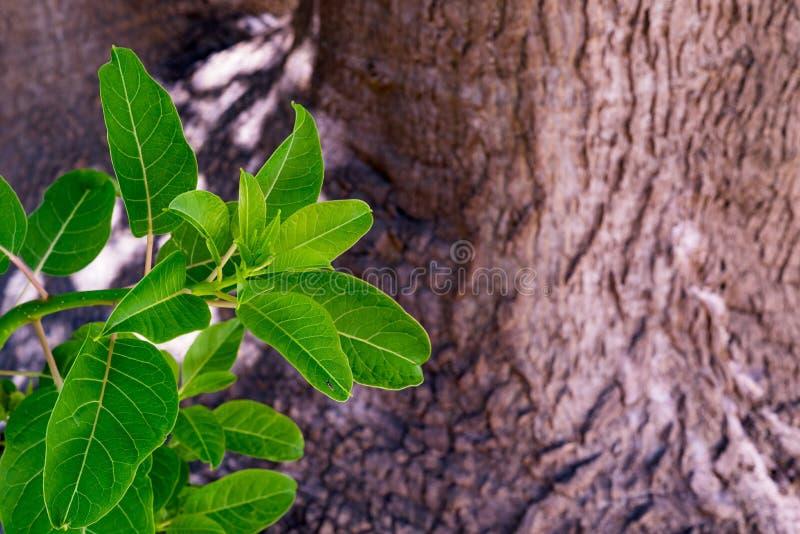 Download Nuevo arbusto verde imagen de archivo. Imagen de verde - 100531947