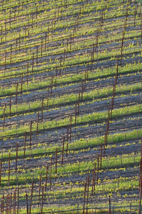 Nuevo campo del vino imagen de archivo