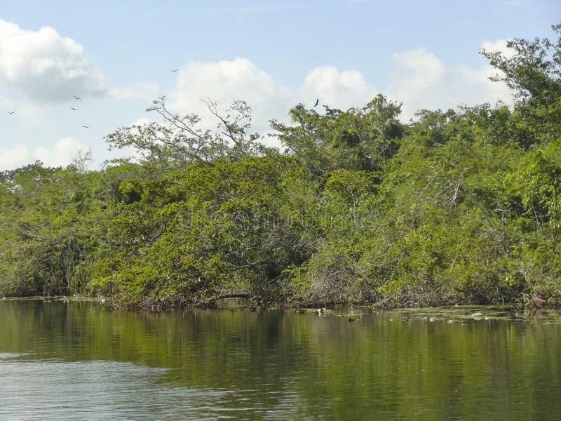 Nuevo río en Belice imágenes de archivo libres de regalías