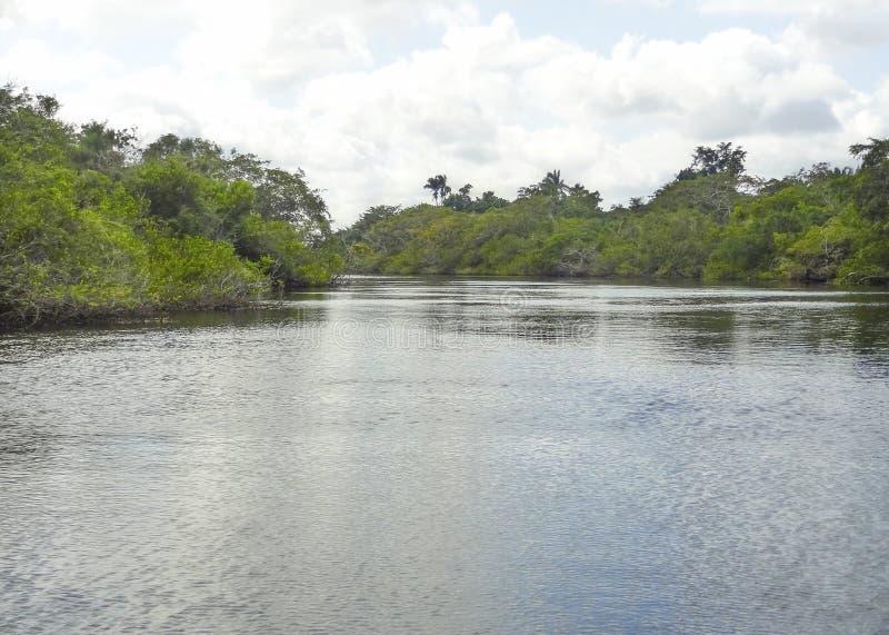Nuevo río en Belice foto de archivo libre de regalías