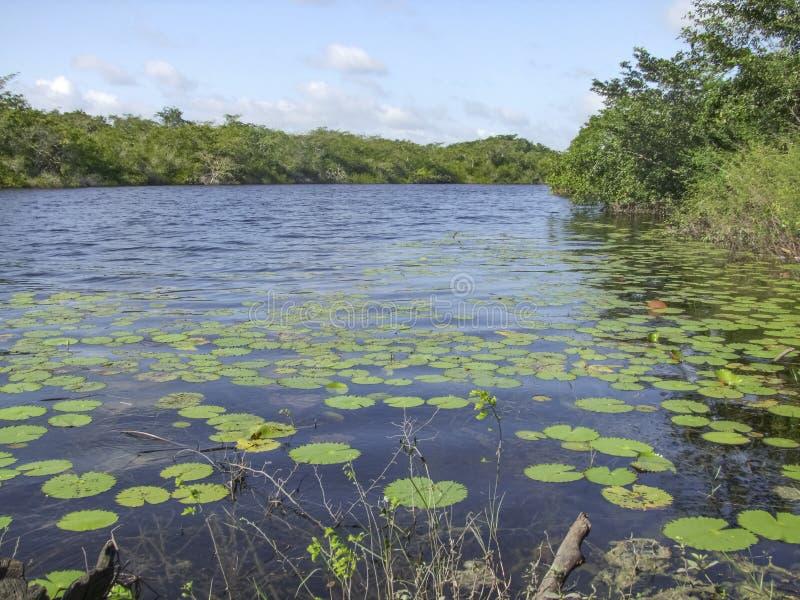 Nuevo río en Belice fotografía de archivo