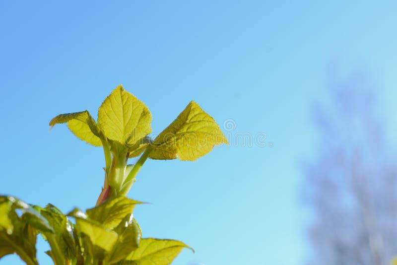 Nuevos arbustos y lanzamientos que crecen en un jardín fotografía de archivo
