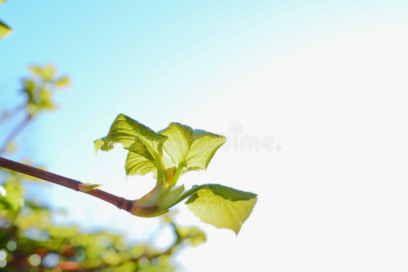 Nuevos arbustos y lanzamientos que crecen en un jardín imagenes de archivo