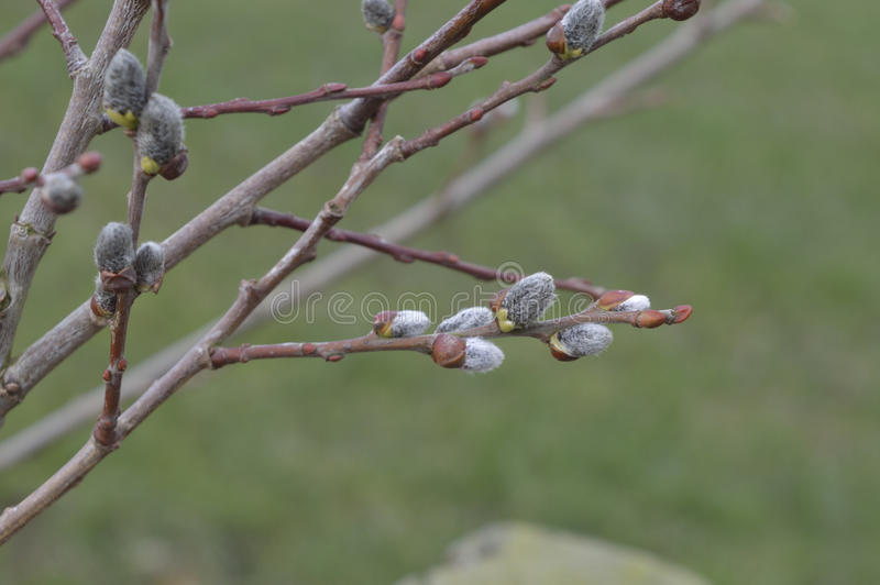 Nuevos brotes de la primavera fotografía de archivo