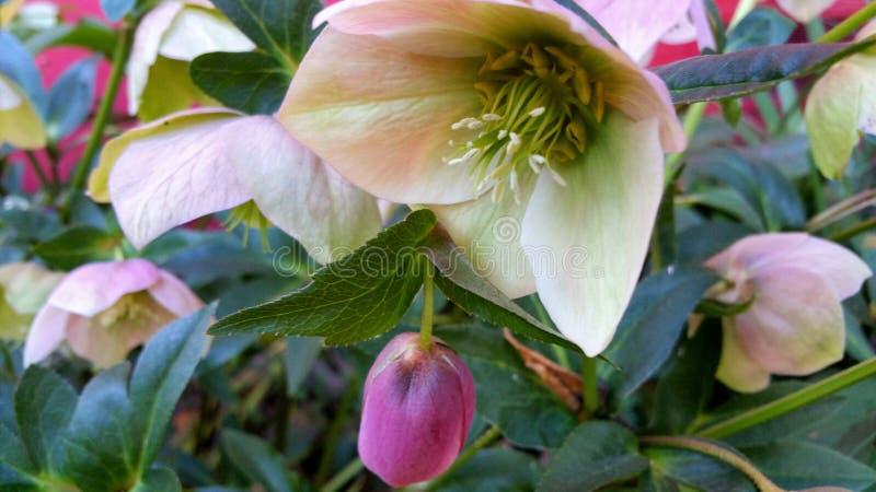 Nuevos flores de la vida fotografía de archivo