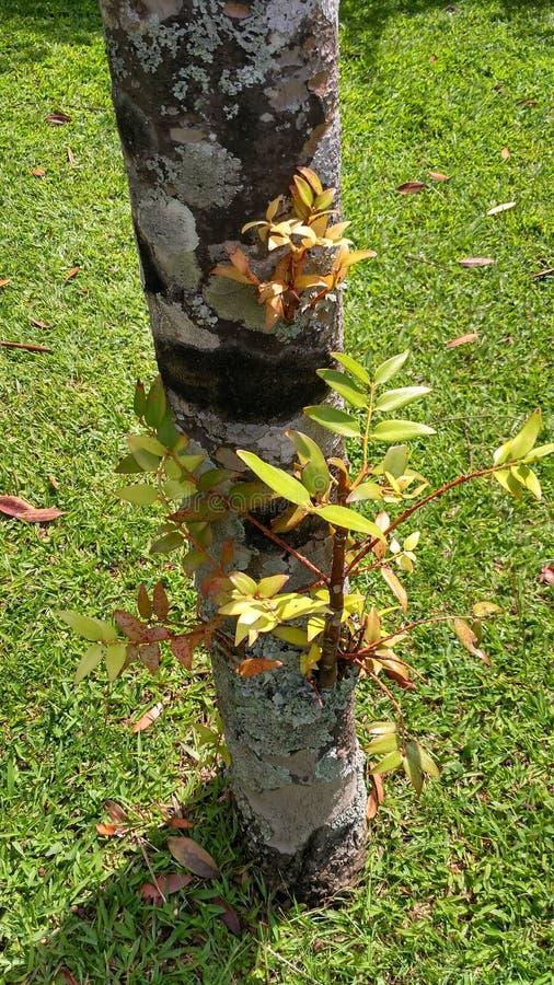 Nuevos lanzamientos en troncos de árbol viejos imagen de archivo