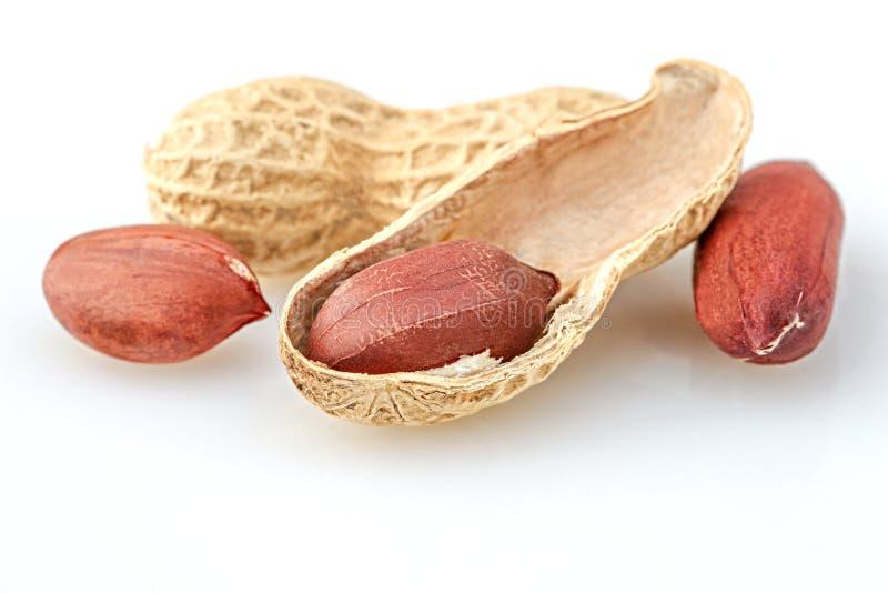 Nuez del cacahuete en el fondo blanco foto de archivo libre de regalías