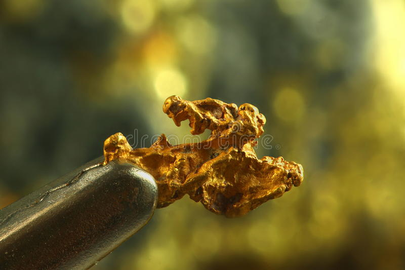 Nugget of gold. This is hand-panned gold from the Lemmenjoki national park in finnish Lapland stock photos