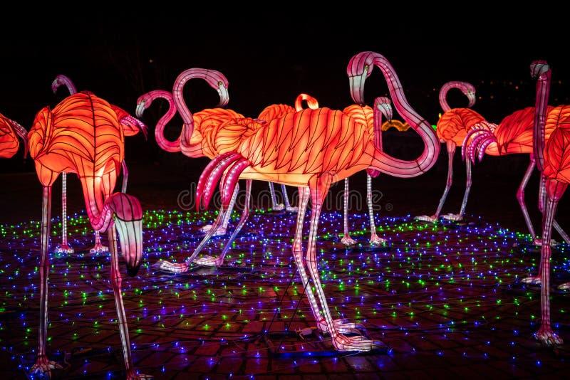 Nuit chinoise d'art de couleur d'exposition de lanterne de flamant image stock