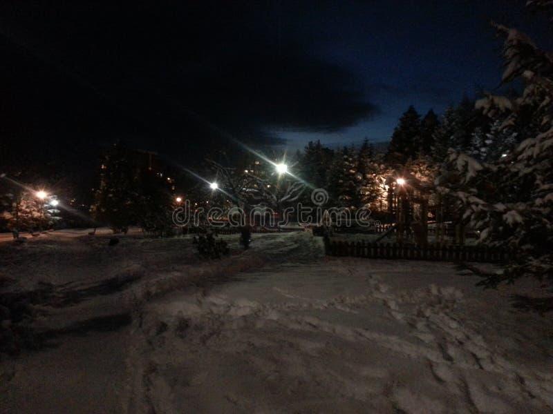 Nuit d'hiver en parc photographie stock libre de droits