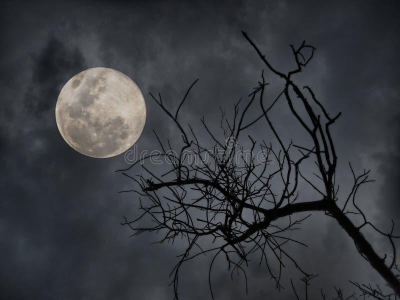 Nuit d'horreur photographie stock libre de droits