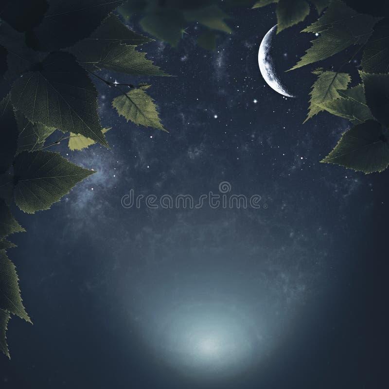Nuit dans la forêt images stock