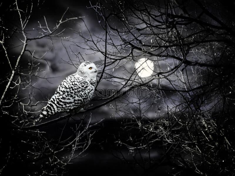Nuit de Veille de la toussaint images libres de droits