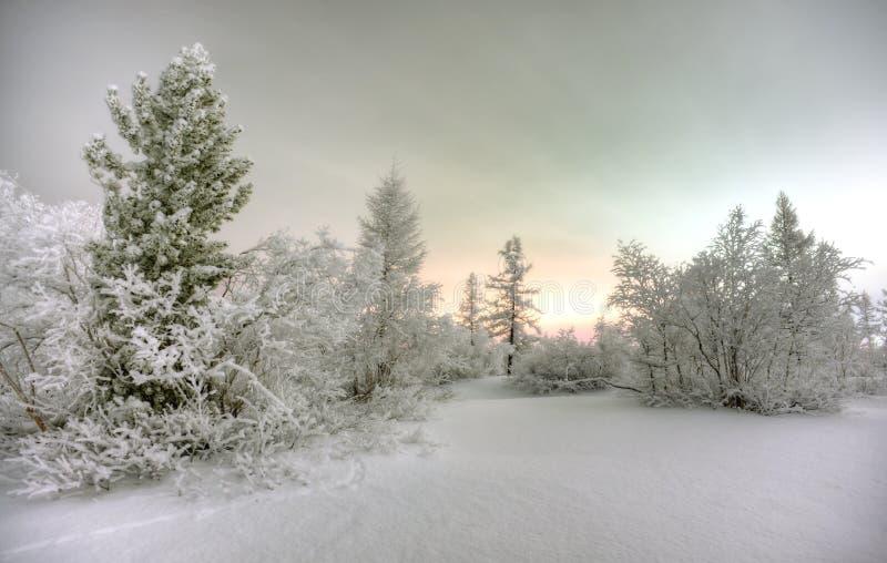 Nuit en forêt de l'hiver images libres de droits