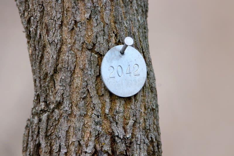 Numérotation d'arbre avec l'insigne en métal image libre de droits