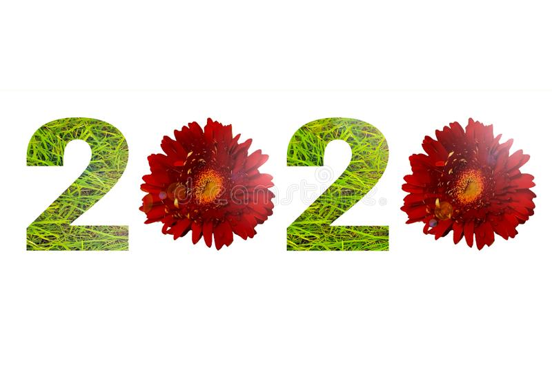 Number 2020 made green grass and red daisy flowers isolated on white background royalty free stock image