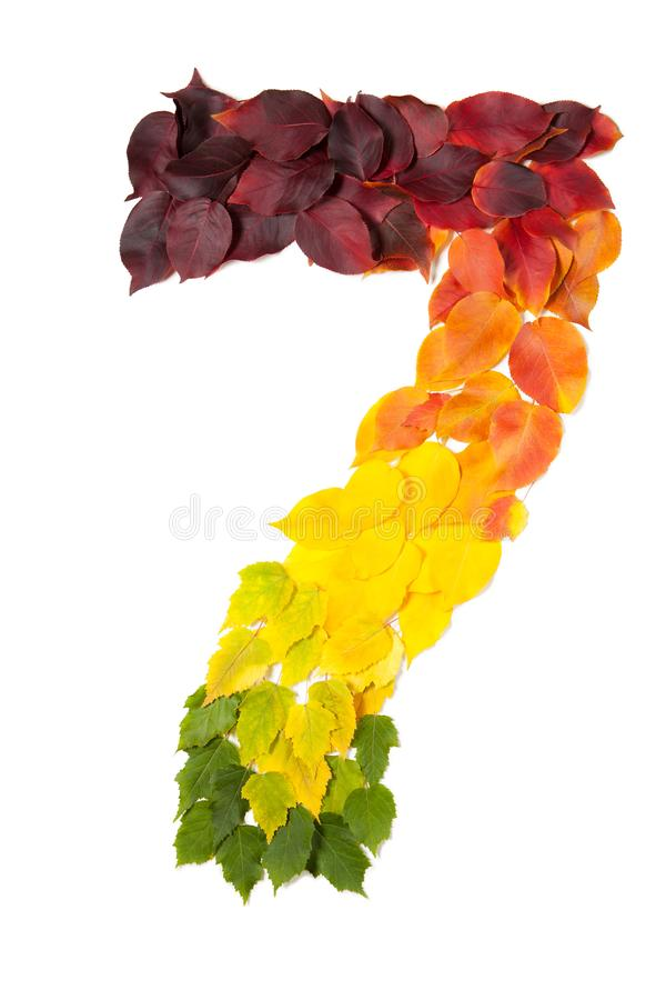 Number seven made with autumn leaves isolated on white. royalty free stock images