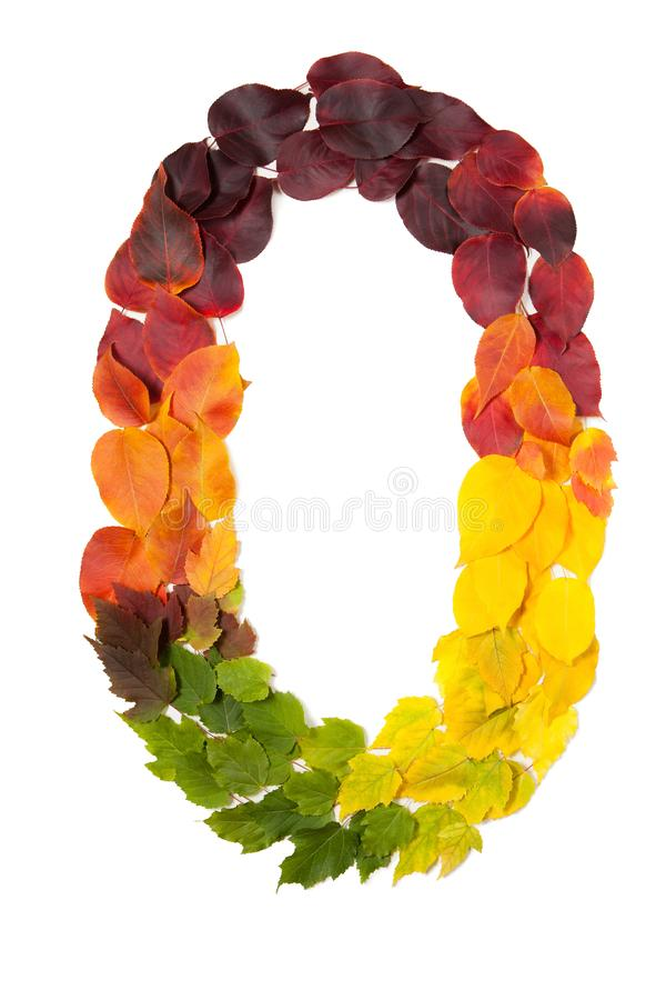 Number zero made with autumn leaves isolated on white. stock images