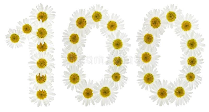 Numeral árabe 100, cem, das flores brancas da camomila imagem de stock royalty free