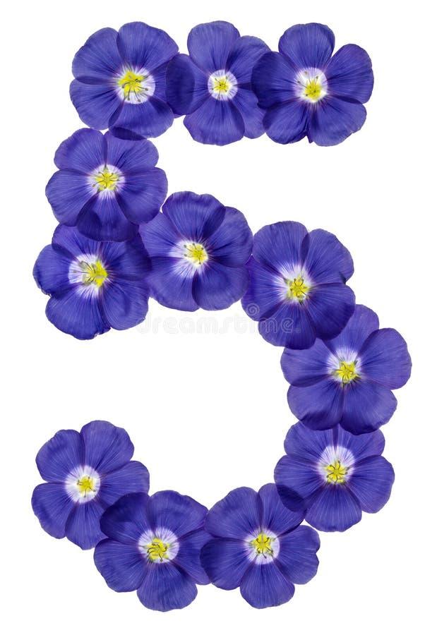 Numeral árabe 5, cinco, das flores azuis do linho, isoladas em w fotografia de stock