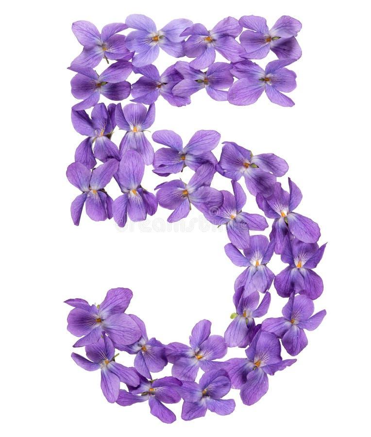 Numeral árabe 5, cinco, das flores da viola, isoladas no branco foto de stock