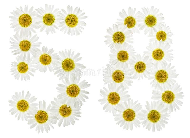 Numeral árabe 58, cinquenta e oito, das flores brancas da camomila, foto de stock