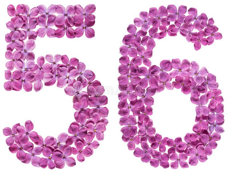 Numeral árabe 56, cinquenta e seis, das flores do lilás, isoladas sobre imagem de stock royalty free