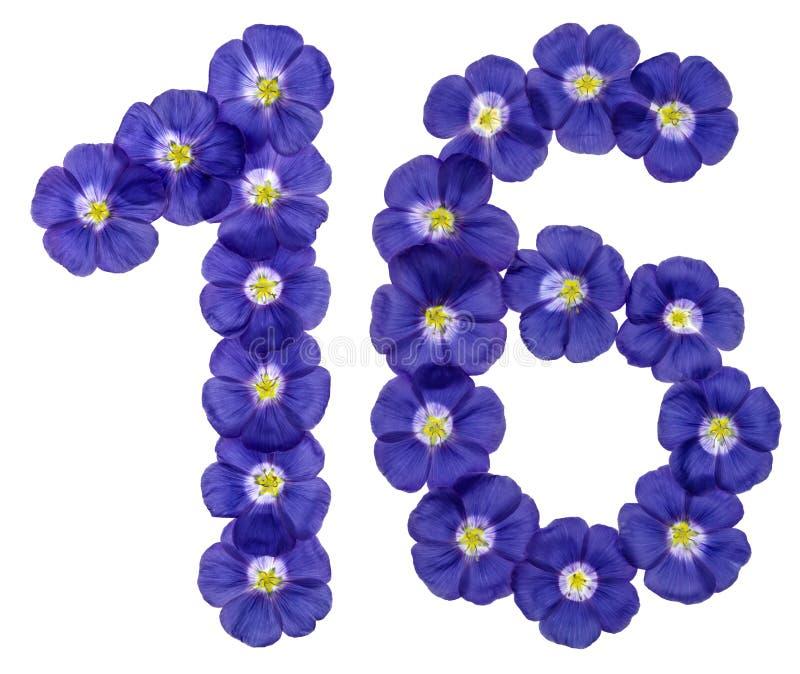 Numeral árabe 16, dezesseis, das flores azuis do linho, isoladas fotos de stock royalty free