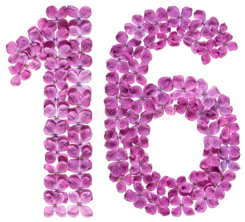 Numeral árabe 16, dezesseis, das flores do lilás, isoladas em w fotos de stock royalty free