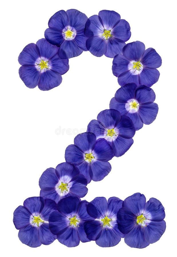 Numeral árabe 2, dois, das flores azuis do linho, isoladas no wh fotos de stock royalty free