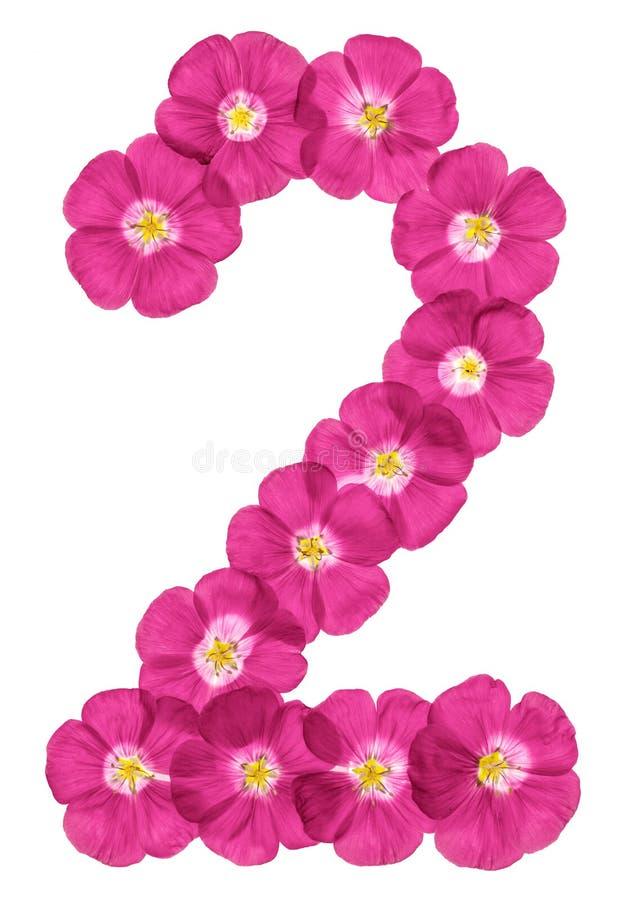 Numeral árabe 2, dois, das flores cor-de-rosa do linho, isoladas no fundo branco foto de stock