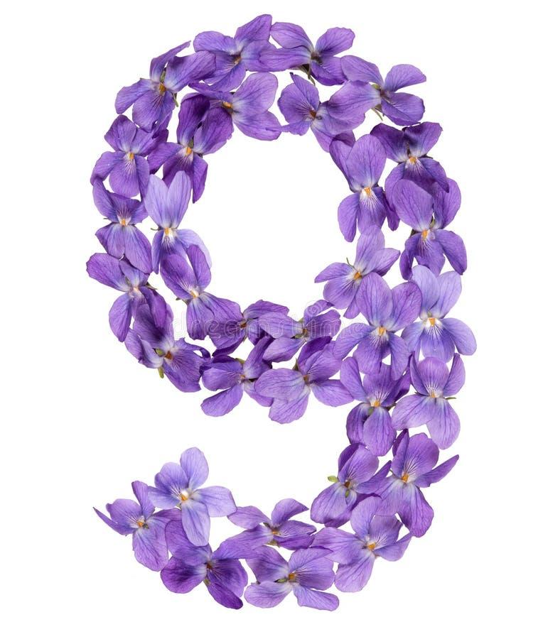 Numeral árabe 9, nove, das flores da viola, isoladas no branco imagem de stock royalty free