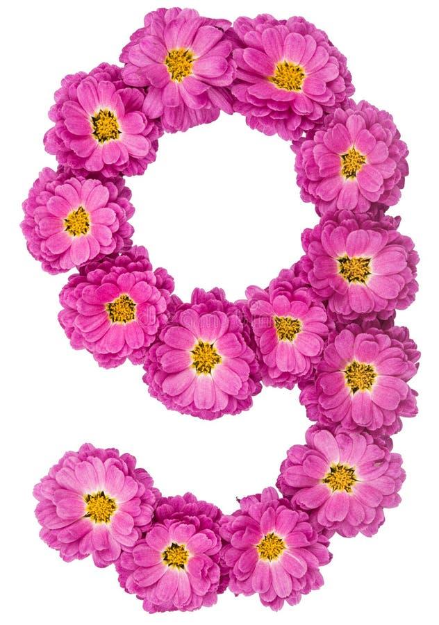 Numeral árabe 9, nove, das flores do crisântemo, isoladas fotos de stock royalty free