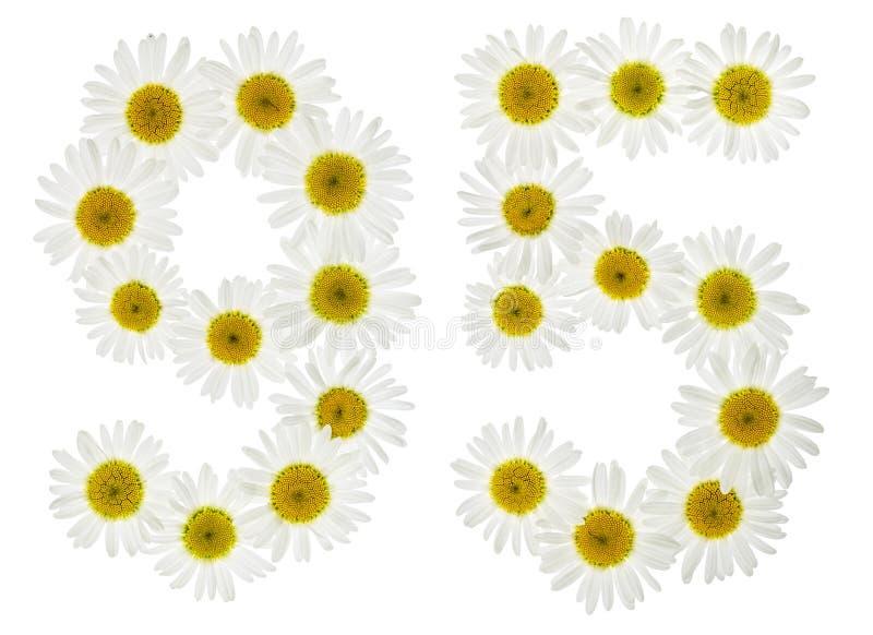 Numeral árabe 95, noventa cinco, das flores brancas da camomila, fotos de stock