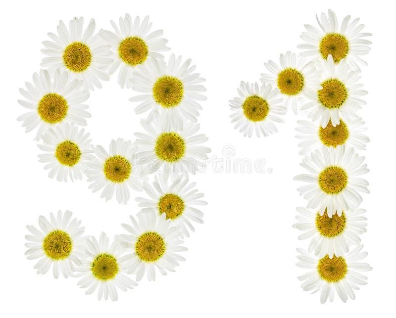 Numeral árabe 91, noventa uma, das flores brancas da camomila, imagens de stock royalty free