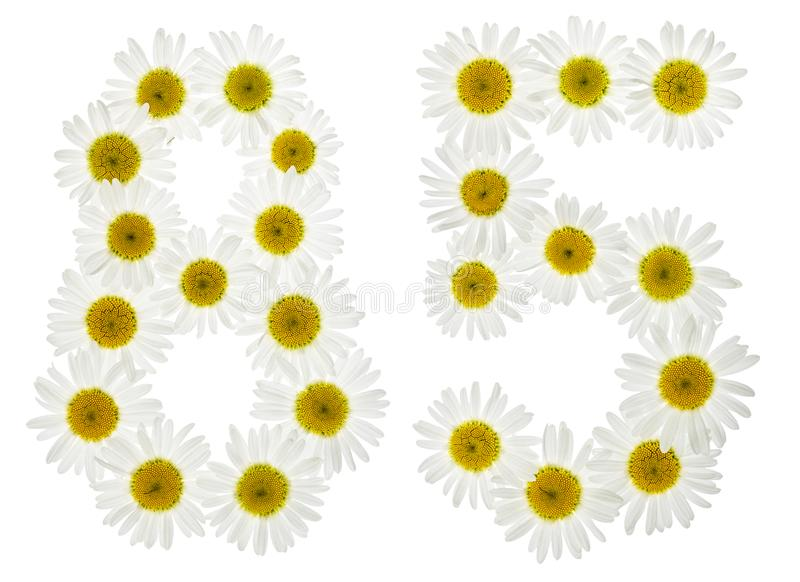 Numeral árabe 85, oitenta e cinco, das flores brancas da camomila, fotos de stock