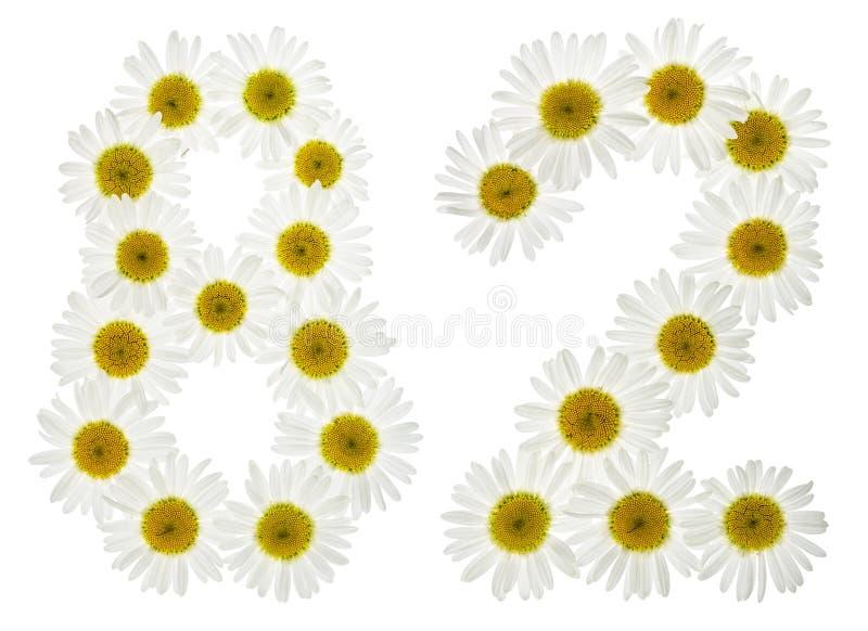 Numeral árabe 82, oitenta e dois, das flores brancas da camomila, foto de stock royalty free