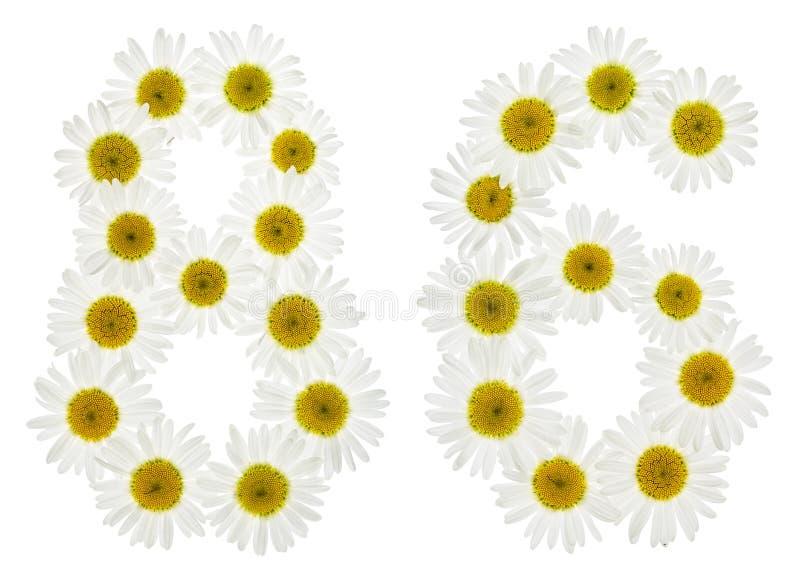 Numeral árabe 86, oitenta e seis, das flores brancas da camomila, fotos de stock