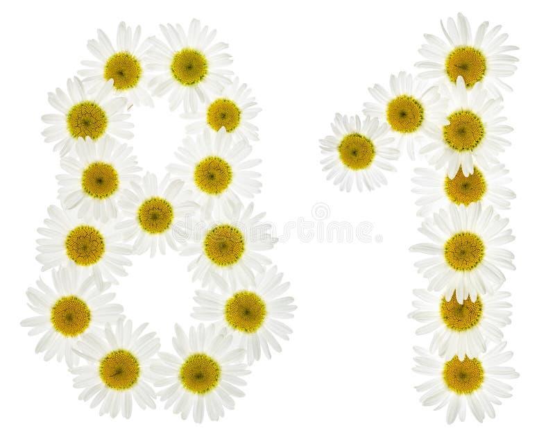 Numeral árabe 81, oitenta uns, das flores brancas da camomila, fotografia de stock